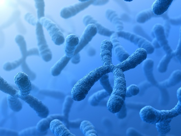 Image of chromosomes showing research in human genetics.